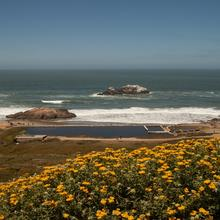 Image of Lands End showing the Sutro Baths ruins in the distance with wildflowers in the foreground.