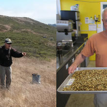 A group collects seed in a grassland. A volunteer holds a tray of seeds.