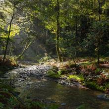 Image of Redwood Creek in Muir Woods