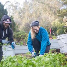 Volunteers Taking Care of Plants in the Presidio
