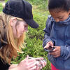 youth using iNaturalist to identify a plant